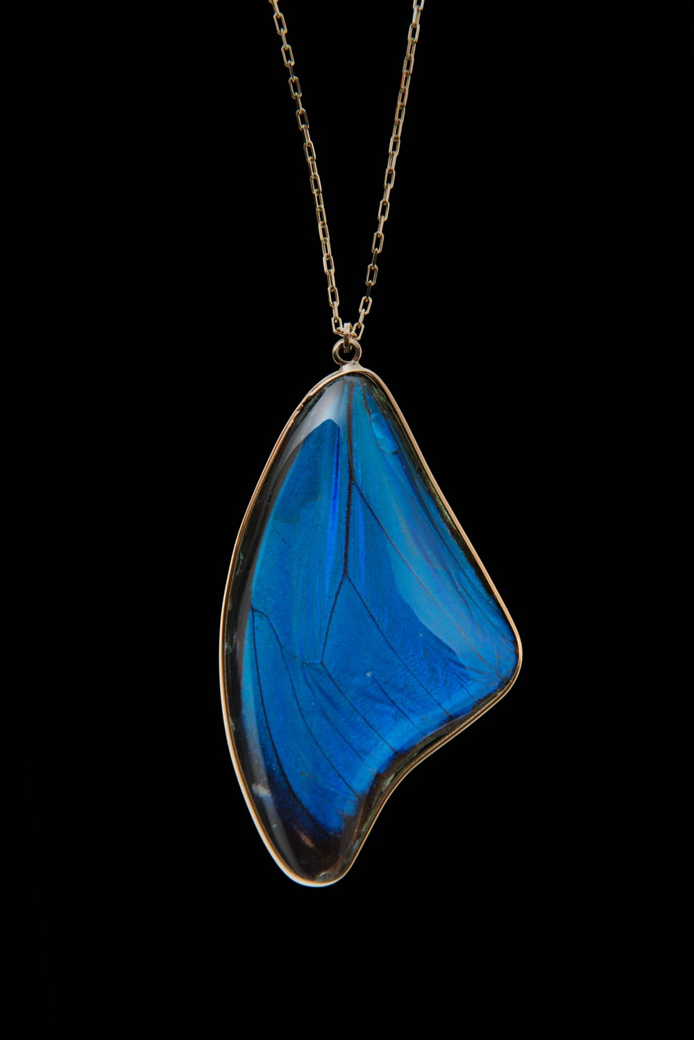 Wing Gold >> Black and Blue Morpho Pendant | Blue Morpho Jewelry